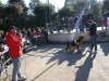 manif_villa_bitonto-113-medium